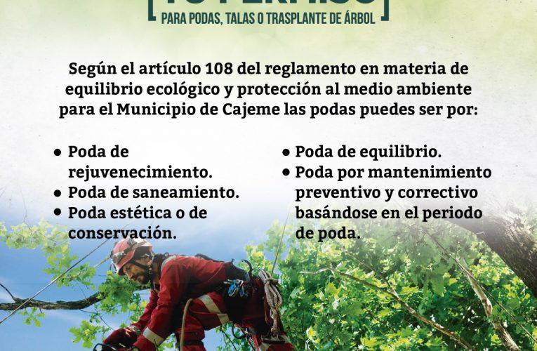 INICIA ECOLOGÍA TEMPORADA DE PODA PARA MANTENIMIENTO DE ARBOLADO DOMICILIARIO